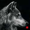 Wolf - Scratchboard Art Wolf