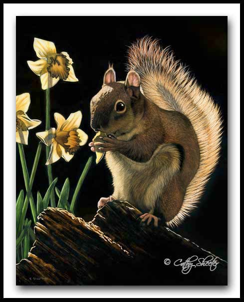 A Taste of Spring- Scratchboard Red Squirrel