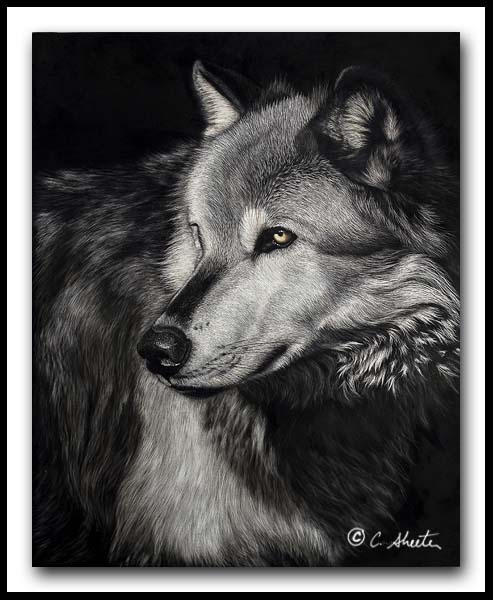 The Scout - Timber Wolf Scratchboard Art