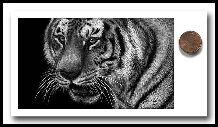 Tiger Mini 1 - Scratchboard