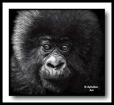 Vulnerable - scratchboard gorilla