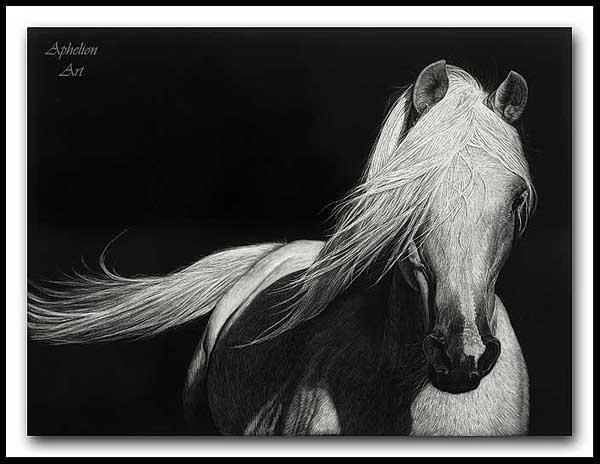 Grace - Arabian Horse Scratchboard