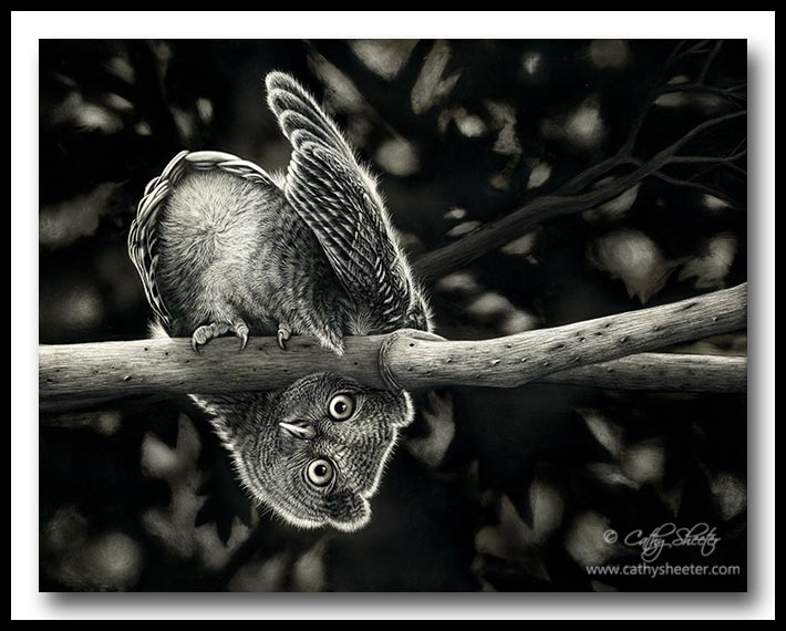 Whooo Goes There - Scratchboard