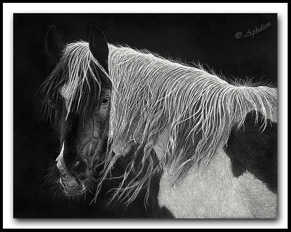 Windknots - Scratchboard Horse