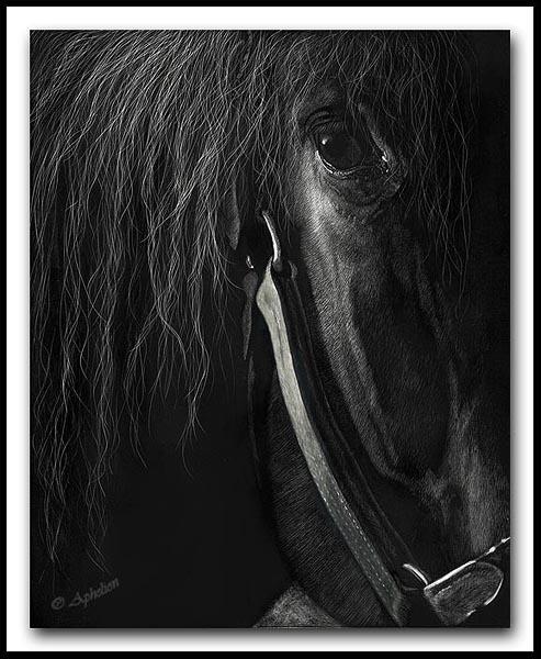 Wisdom Scratchboard Horse