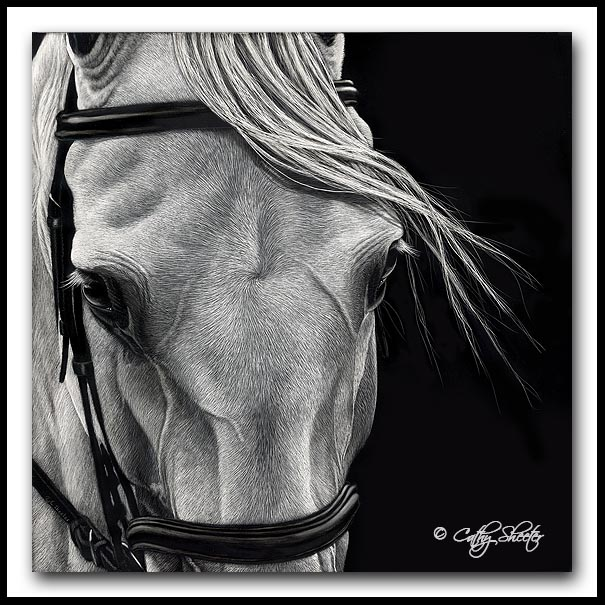 X, Halt, Salute - scratchboard dressage horse